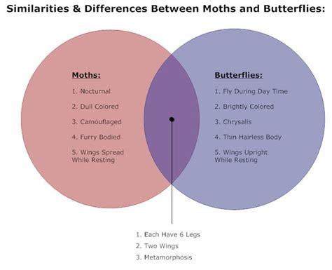 venn diagram explanation exles butterflies moths venn diagram presentation quality visuals butterflies venn