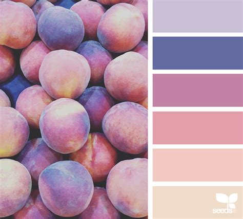 design seeds fresh hues design seeds