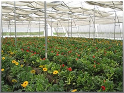Greenhouse Farming Guide in India   Agrifarming.in