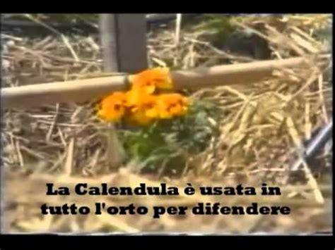 il giardino di emilia hazelip il giardino sinergico di emilia hazelip subtitle italiano