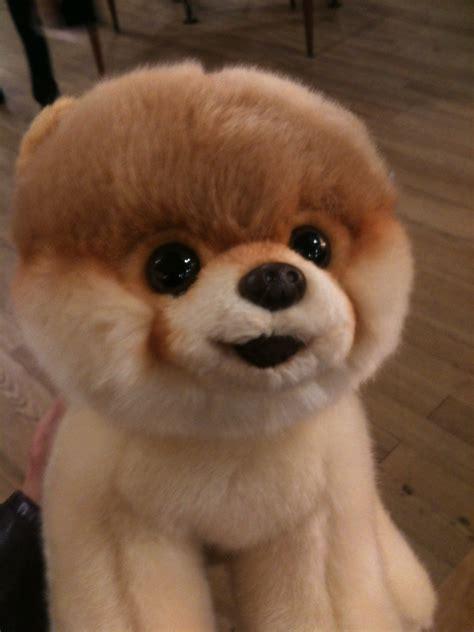 the cutest puppy kathryn 224 la mode