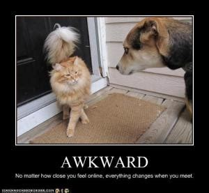 Awkward Cat Meme - starting our laughs early before tonight s a funny affair