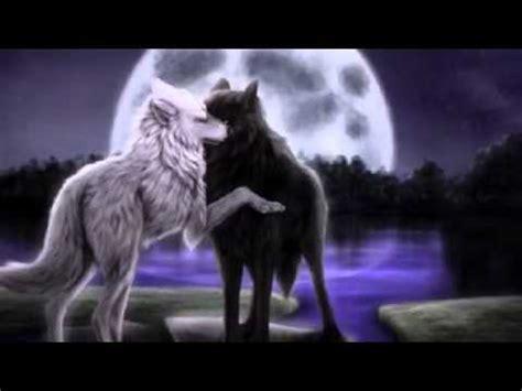 imagenes en blanco y negro de lobos the troubles amor de lobos lobo negro y loba blanca