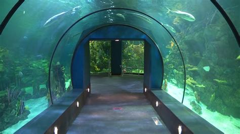 after 2 years of renovations new moody gardens aquarium