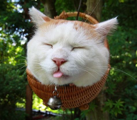 cat wallpaper nippon cute and lovable sleeping cat photographs incredible snaps
