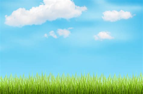gras himmel top header grass sky background jpg diego s lawn care