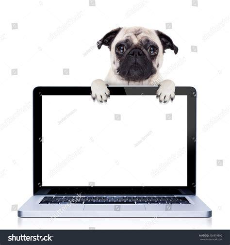pug computer pug laptop pc laptop stock photo 236879800