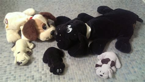 puppy pound pin pound puppies on