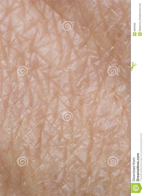 human skin royalty free stock images image 7686839 human skin royalty free stock photos image 8665998