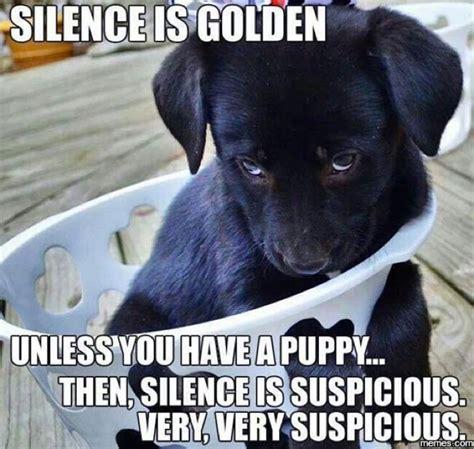 New Dog Meme - funny memes
