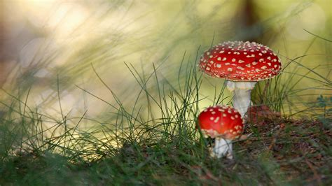small wallpaper small mushrooms wallpapers hd wallpapers