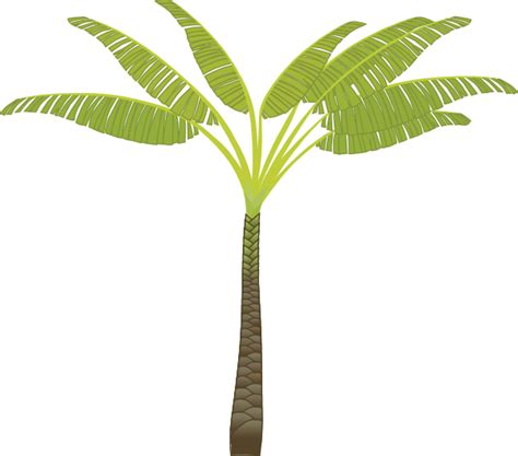 palm tree templates palm tree leaf template printable clipart best