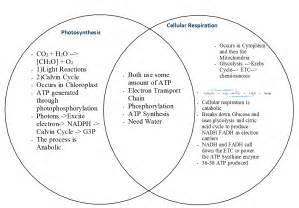 cellular respiration and photosynthesis venn diagram