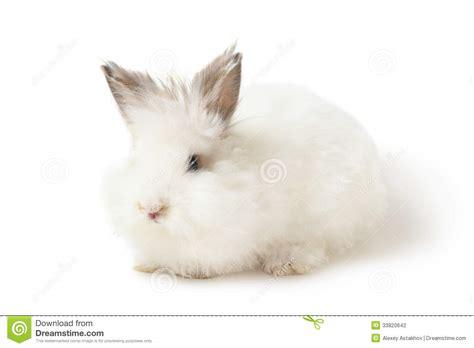 Rabbit Hutch Prices White Rabbit Stock Photography Image 33820642