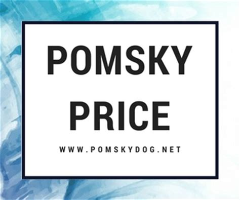pomeranian and husky mix price pomsky price how much are pomsky puppies pomeranian husky