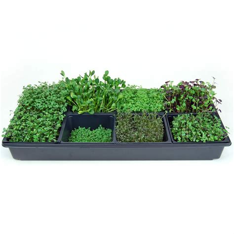 sectional hydroponic microgreens growing kit grow indoor