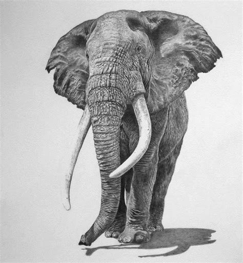17 best images about elephants drawings on pinterest an