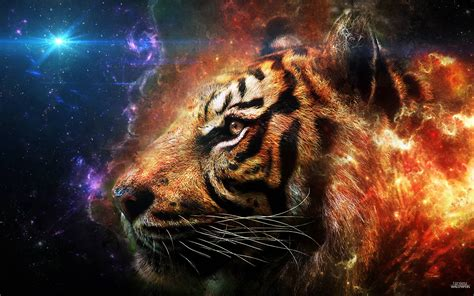 wallpaper laptop harimau tiger backgrounds pictures wallpaper cave