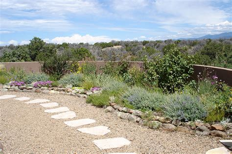small backyard desert landscaping ideas planted with