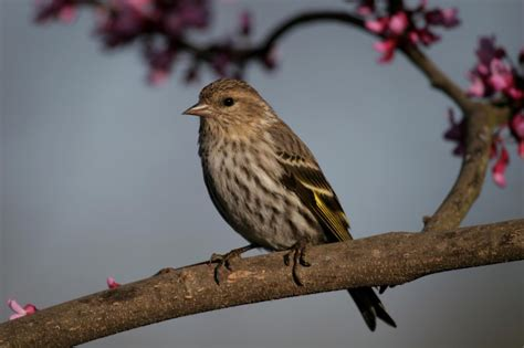 best 28 birds of east tennessee identification