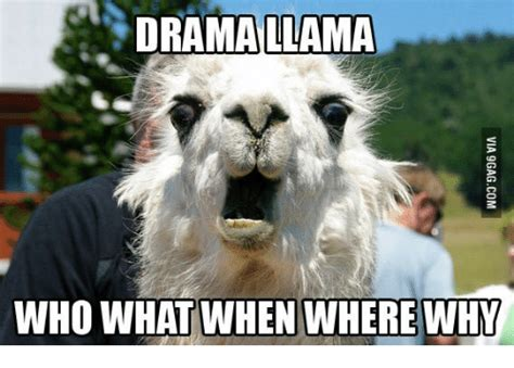 Drama Llama Meme - llama who what when where why who meme on sizzle