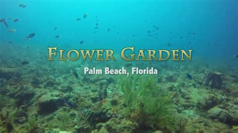 Flower Gardens Scuba Flower Garden Scuba Dive Palm Florida On Vimeo