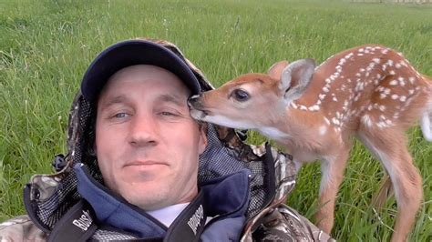 saves baby deer saves abandoned baby deer
