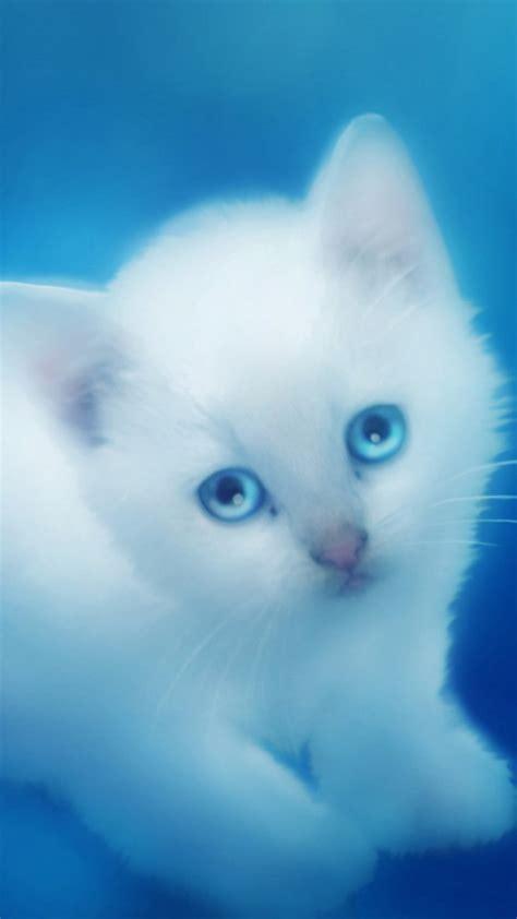 wallpaper iphone cat cute cute white kitten wallpaper free iphone wallpapers