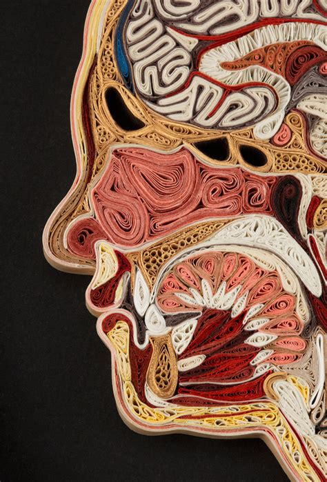 anatomy sections anatomical cross sections made with quilled paper by lisa
