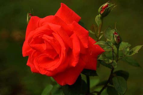 imagenes bonitas de cumpleaños de flores im 225 genes de flores bonitas vol 3 12 fotos imagenes y