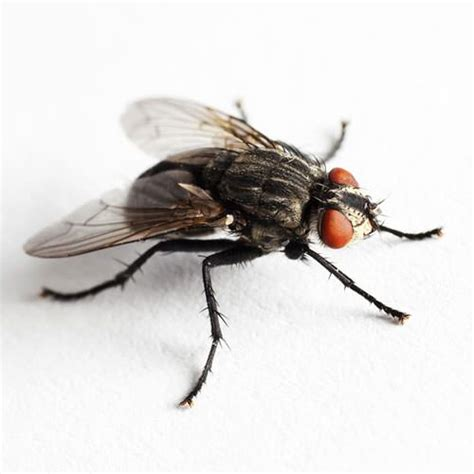 Flies In House by 52 Animal Impressions Using Household Objects