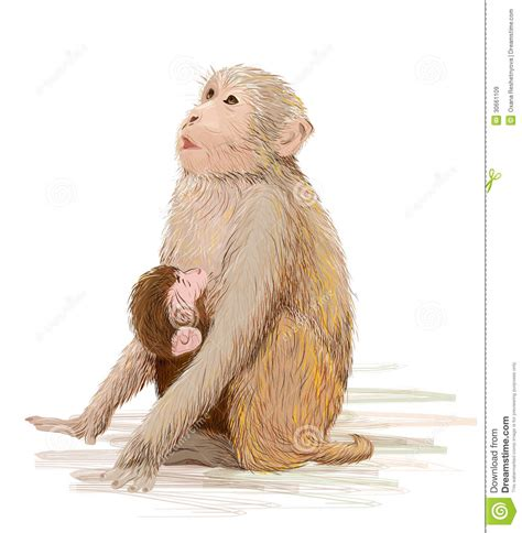 baby monkey feeding time monkey feeding newborn baby stock vector image 30661109