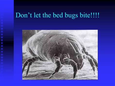 dont let the bed bugs bite ppt symbiotic relationships words 17 22 symbiosis