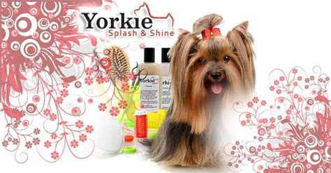 yorkie grooming tips 17 best ideas about yorkie hairstyles on terrier haircut yorkie