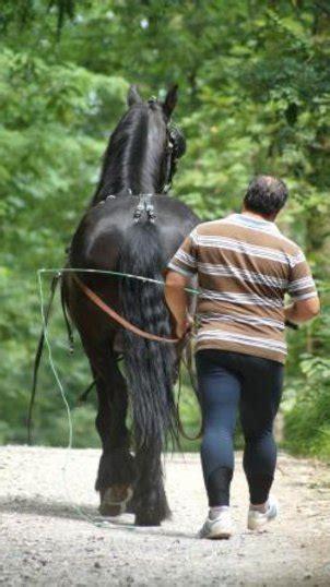 cavalli da carrozza in vendita subito cavalli in vendita attacchi
