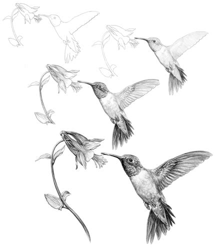 how to draw a hummingbird on a flower how to draw a hummingbird and flower