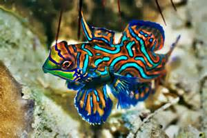 color fish the biomechanics of fish color details articles tfh