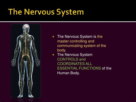 powerpoint templates free nervous system powerpoint template nervous system image collections