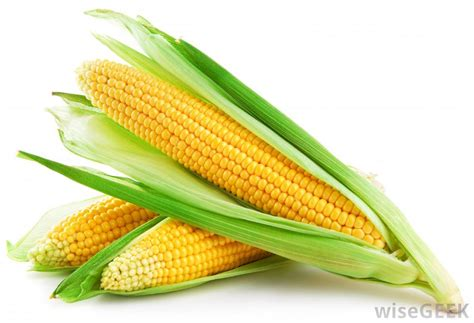 what is a corn what is maize with pictures