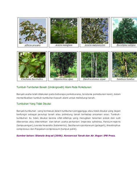 Net Pelindung Tanaman tanaman penutup tanah