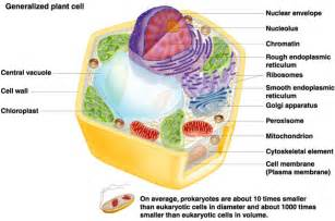 plant and animal cells labeled graphics