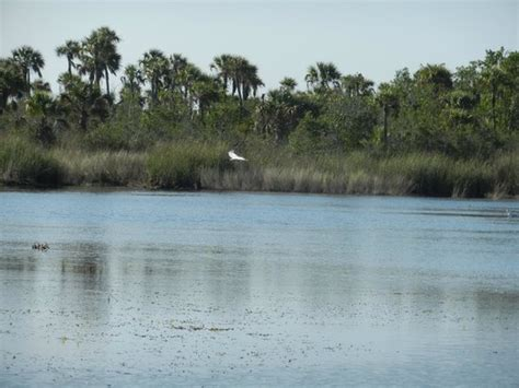 everglades airboat tours fort myers thrilling airboat ride picture of everglades adventure