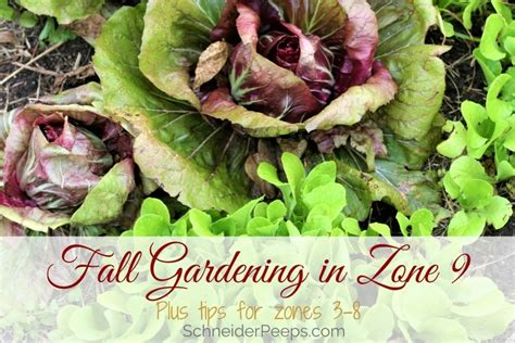 Zone 9 Gardening by Fall Gardening In Zone 9 With Links To Other Zones