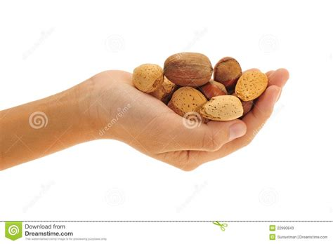 Holding The Nuts holding mix nuts stock photos image 22990843