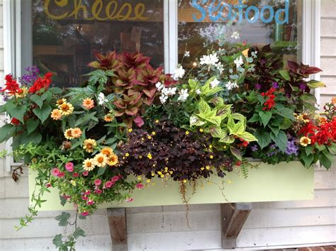 annuals for containers carolyn s shade gardens