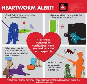 heartworm treatment cost 24 confirmed cases of heartworm in adelaide pet universe
