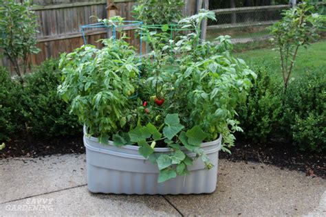 container vegetable plants the best varieties for success