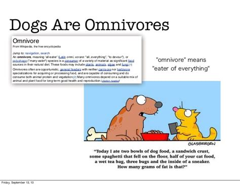 are dogs omnivores what s really in pet food stop poisoning your