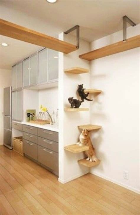 diy cat perches for dogs dogs and