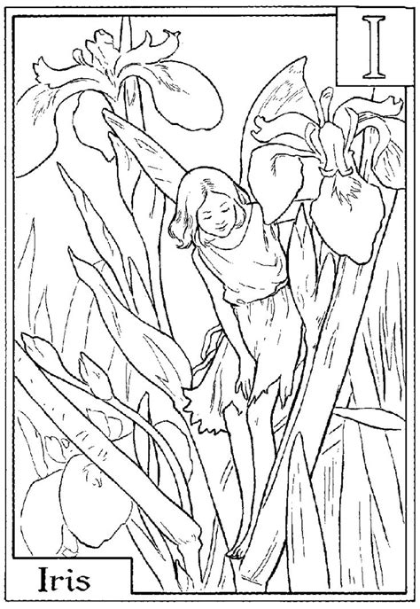 coloring page iris m and m coloring pages flower coloring page iris